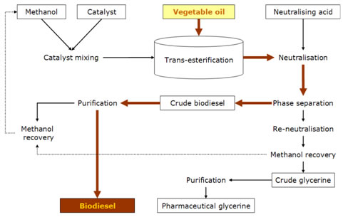 Simplified representation of the biodiesel conversion process from vegetable oil 01
