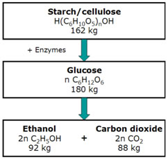 Hydrolysis of starch and cellulose followed by fermentation of glucose to ethanol